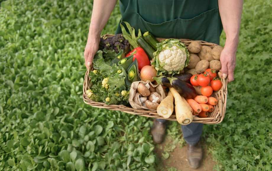 organic produce not great for the environment