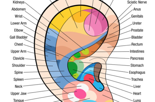ear-reflexology-chart-map