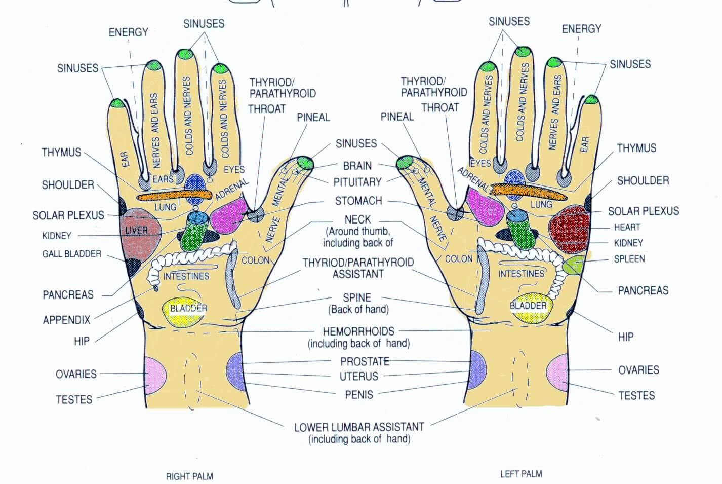 hand reflexology chart map (1)